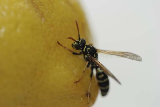 citrina7