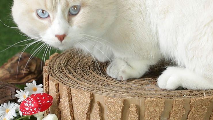 kates-draskykle