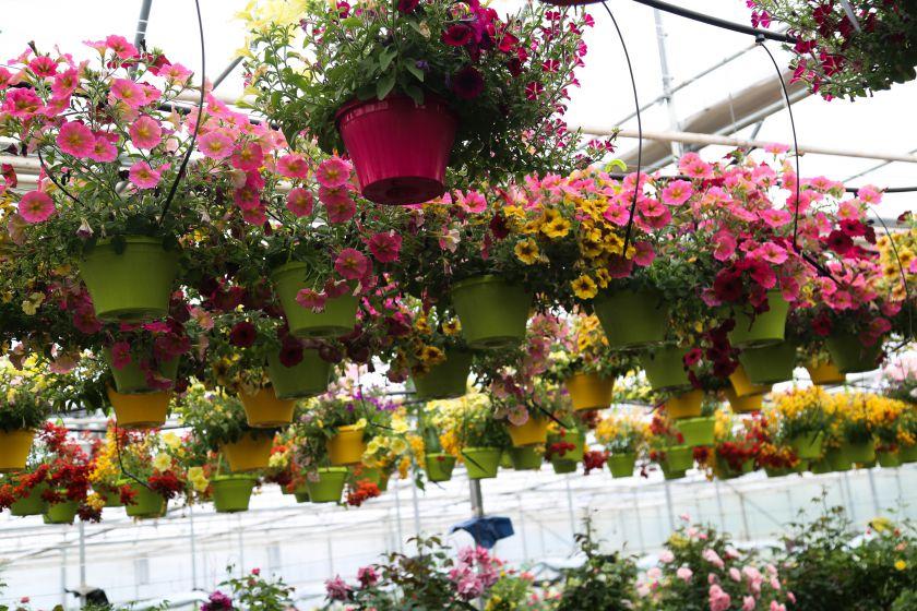 Praktiniai patarimai: puošiame balkoną augalų kompozicijomis (video)