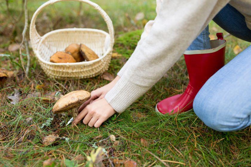 Grybų ABC: kaip atpažinti tinkamus valgyti grybus ir trys auksinės  grybautojo taisyklės